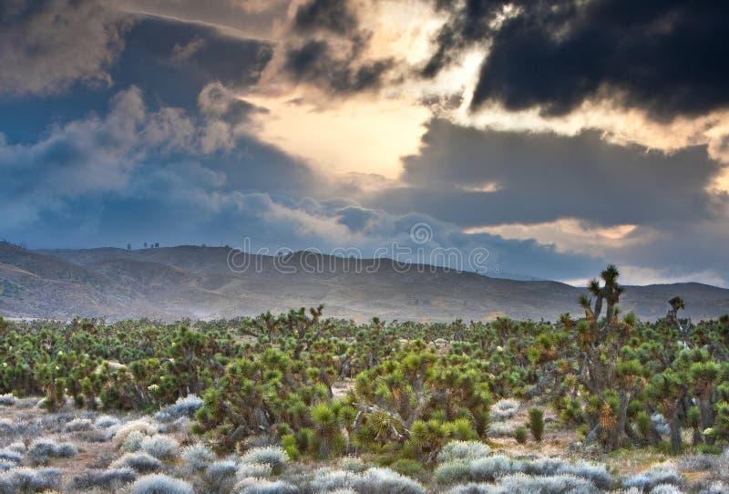 antylopy Joshua statywowi drzewa dolinni obrazy royalty free
