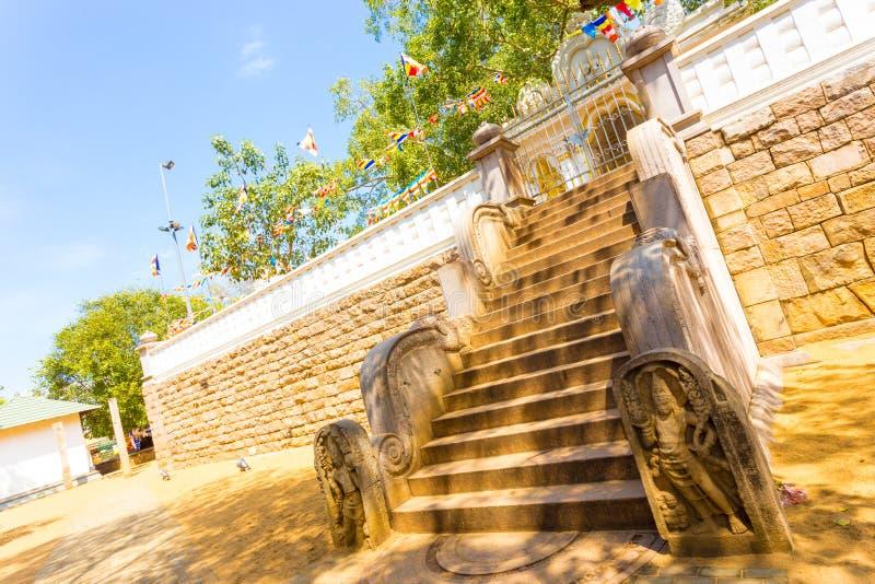 Anuradhapura Jaya Sri Maha Bodhi Tree Sky Angled stock photography