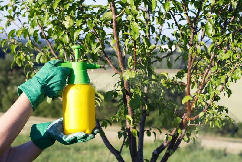 Använd handsprejaren med bekämpningsmedel i trädgården arkivfoton