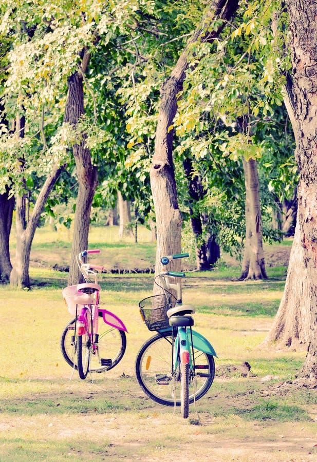 Användare betraktar två cyklar i parkera arkivfoton