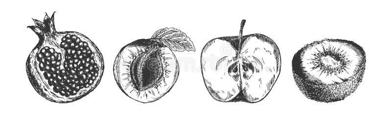 Användbara frukter ställde in i inristad stil royaltyfri foto