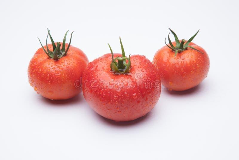 anv?nde den mogna tomaten f?r bakgrundsillustrationingreppet vektorwhite royaltyfri bild