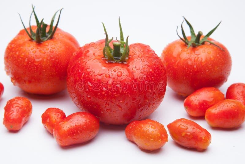 anv?nde den mogna tomaten f?r bakgrundsillustrationingreppet vektorwhite arkivbild