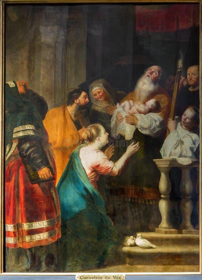 Anvers - la présentation dans le temple par Cornelius de Vos dans l'église de St Pauls (Paulskerk) photo stock