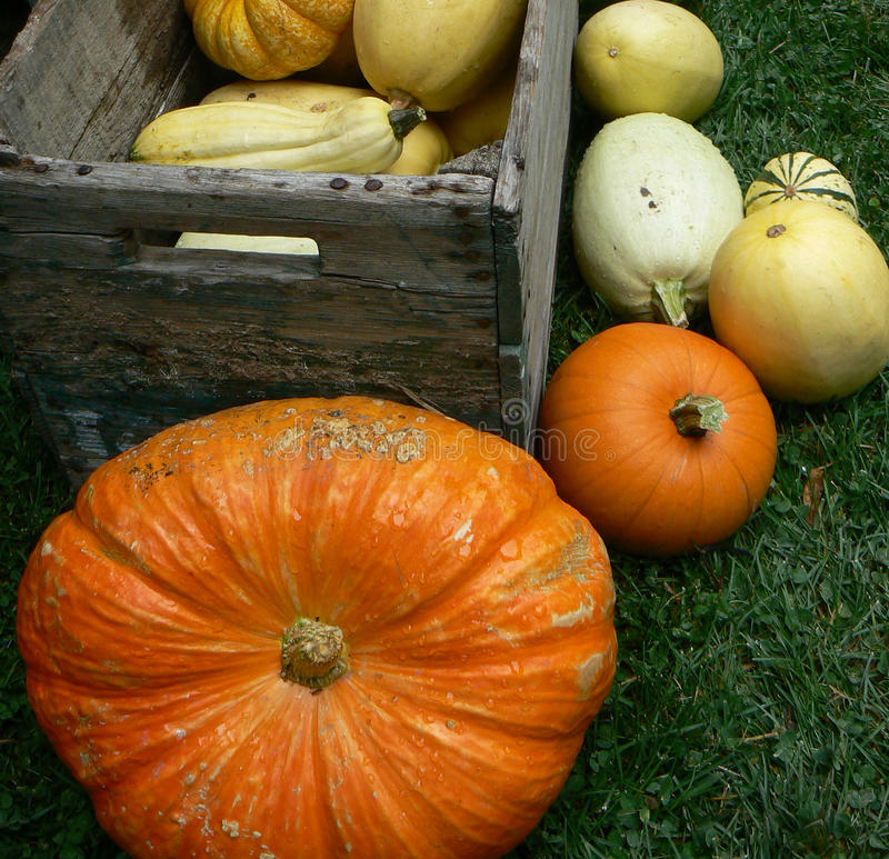 Any Pumpkins left stock images