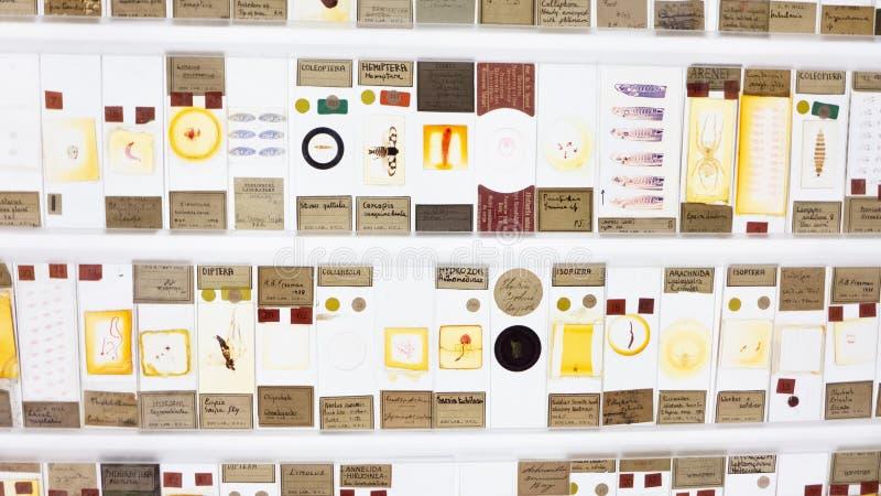Anzeige von Insekten und von Mikroleben auf dem Neonzuschauer in Grant Museum von Zoologie London lizenzfreie stockfotografie