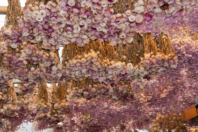 Anzeige von Trockenblumen für Verkauf im Amsterdam-Blumenmarkt lizenzfreie stockfotos