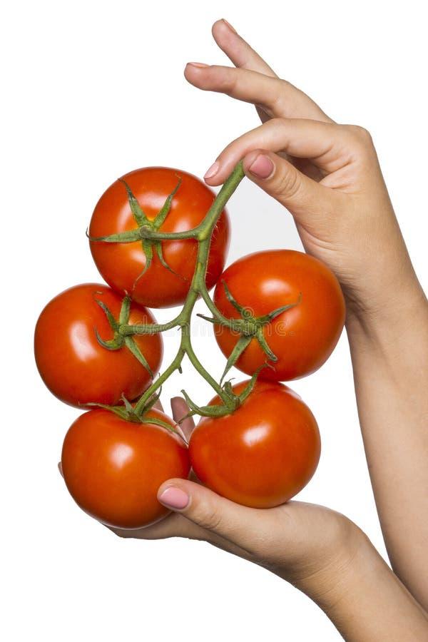 Anzeigenniederlassung mit Tomaten lizenzfreies stockfoto