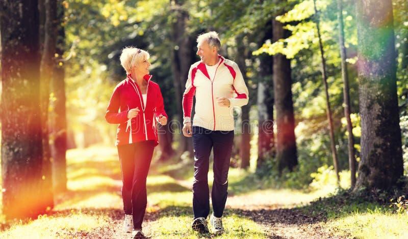 Anziani che pareggiano su un sentiero forestale fotografia stock