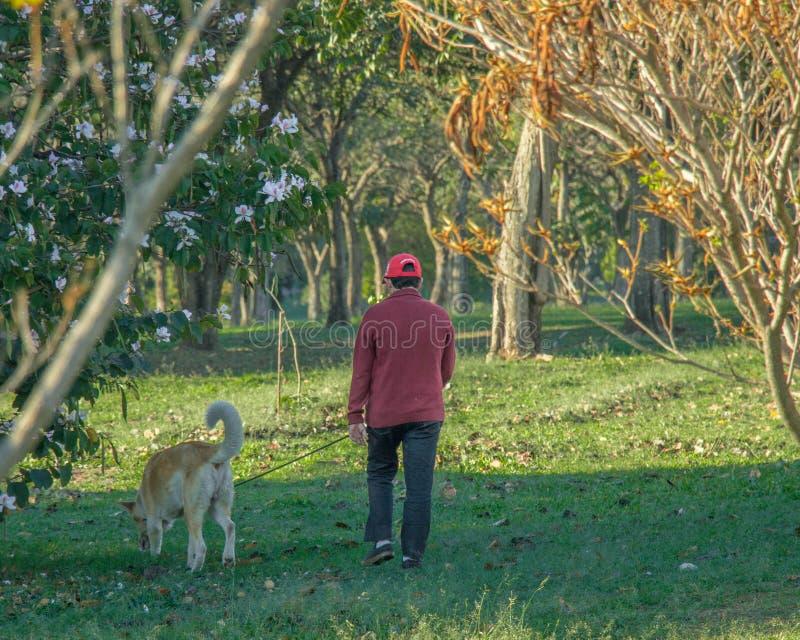 Anziano che prende il suo cane per una passeggiata nel parco di mattina fotografie stock