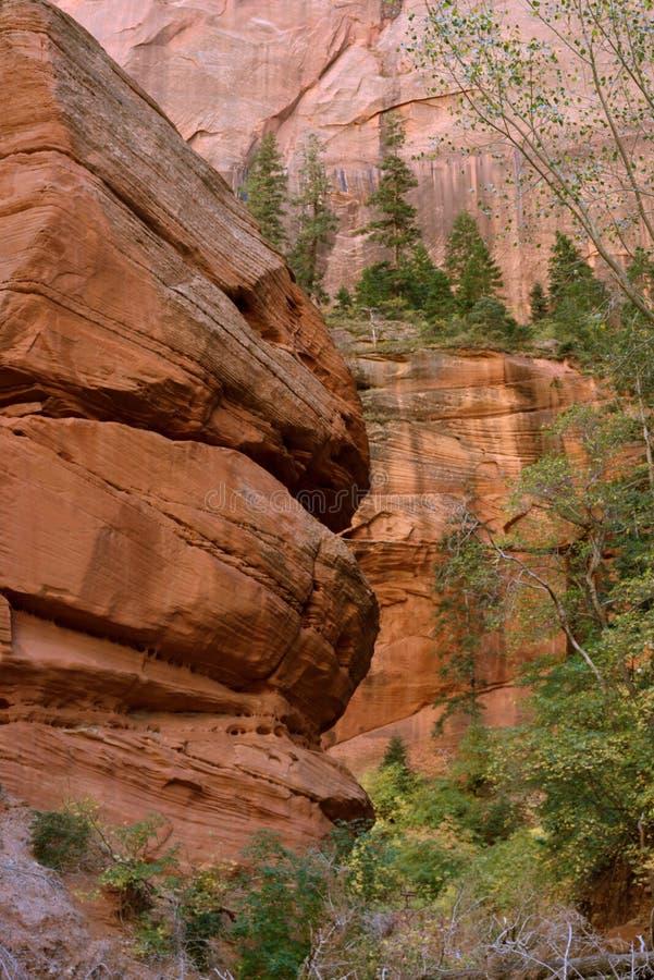 Ao longo da forquilha média de Taylor Creek Trail, gargantas do Kolob, Zion National Park do dedo, Utá fotografia de stock