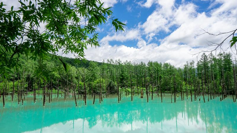 Aoiike Blue pond in Biei, Hokkaido in summer stock images