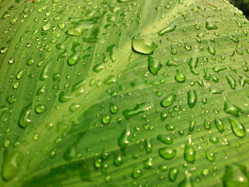 Após a chuva imagens de stock royalty free