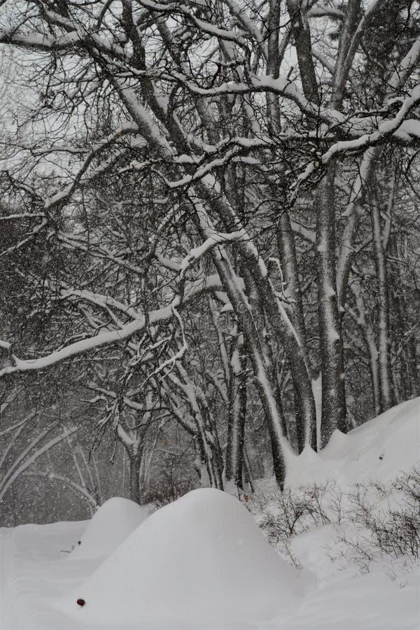 Após uma tempestade do inverno imagem de stock
