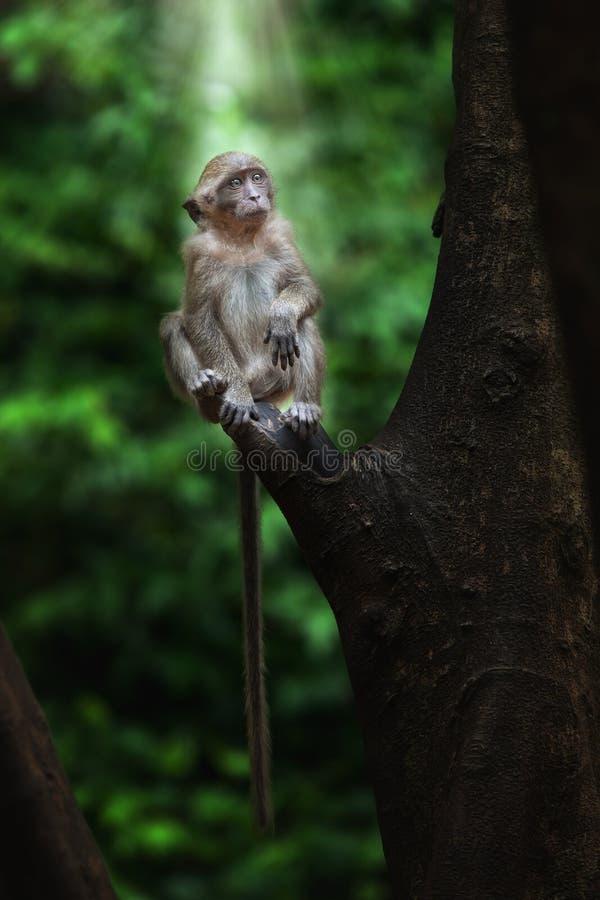 Download Apa arkivfoto. Bild av primat, furry, uttryck, gulligt - 19789782