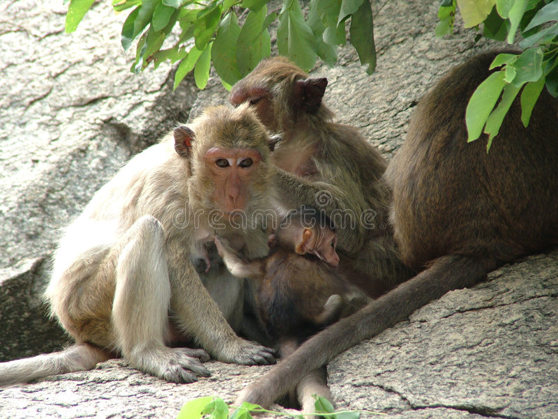 Download Apa arkivfoto. Bild av park, tree, djungel, däggdjur, trä - 276448