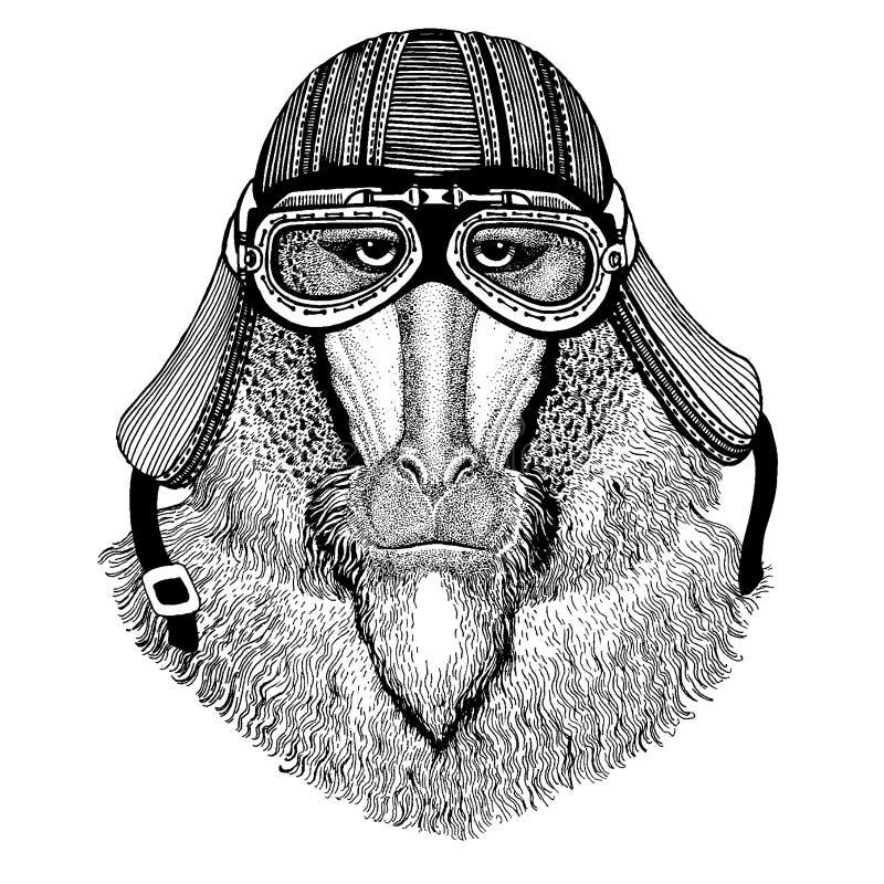 Apa babian, hund-apa, för löst hjälm för motorcykel cyklistdjur för apa bärande Utdragen bild f?r hand f?r tatueringen, emblem, e vektor illustrationer