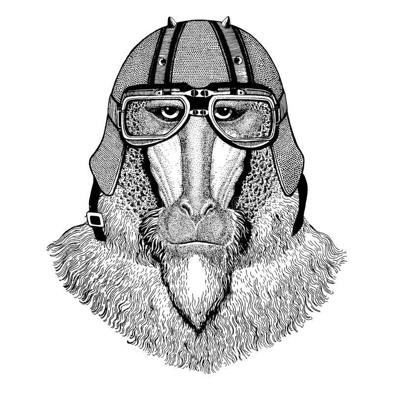 Apa babian, hund-apa, apa som bär en motorcykel, aero hjälm Utdragen bild för hand för tatueringen, t-skjorta, emblem, emblem royaltyfri illustrationer