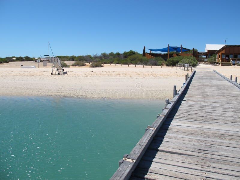 Apa Mia, hajfjärd, västra Australien royaltyfria bilder