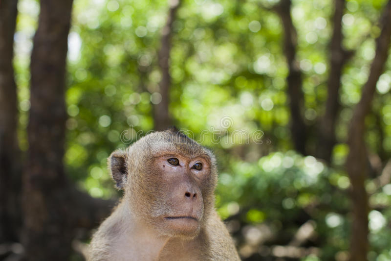 Apa och skogen arkivfoto