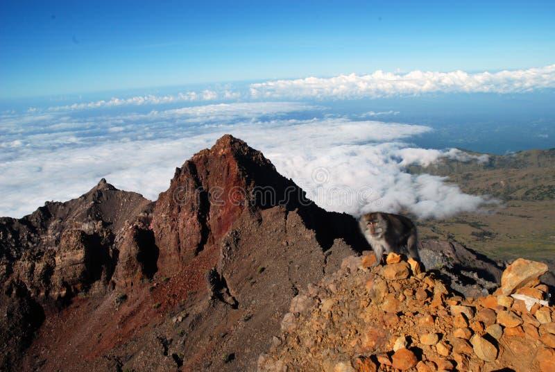 Apa på det maximala Rinjani berget fotografering för bildbyråer