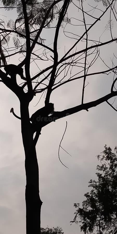 Apa på det så lyckliga trädet arkivfoto