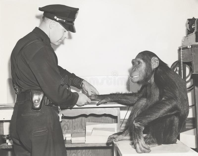 Apa som identifieras med fingeravtryck av polisen royaltyfri bild