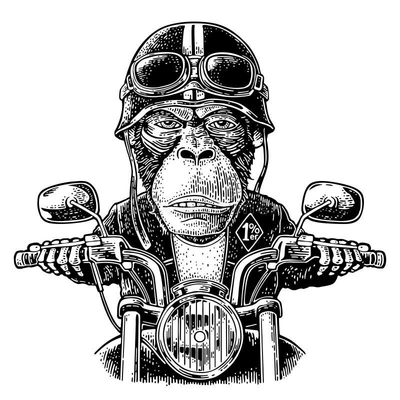 Apa som kör ritter för en motorcykel Vektortappninggravyr stock illustrationer