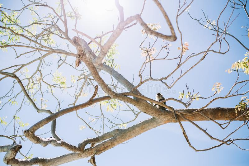 Apa som sitter på träd under sommar royaltyfri fotografi