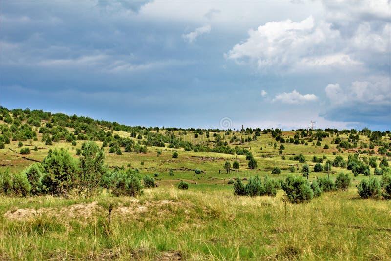 Apache las państwowy, służby leśne droga 51, Arizona, Stany Zjednoczone obraz royalty free