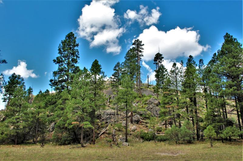 Apache Sitgreaves National Forests, Arizona, United States. Scenic landscape view of the Apache Sitgreaves National Forests, located in east central Arizona stock photos