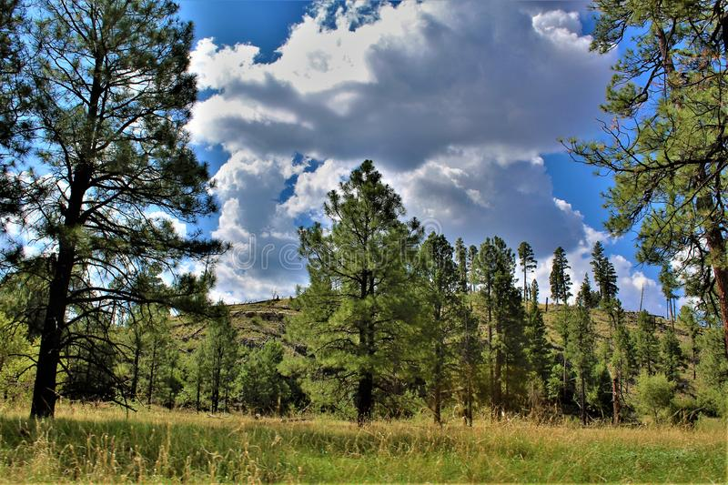 Apache Sitgreaves National Forests, Arizona, United States. Scenic landscape view of the Apache Sitgreaves National Forests, located in east central Arizona stock images