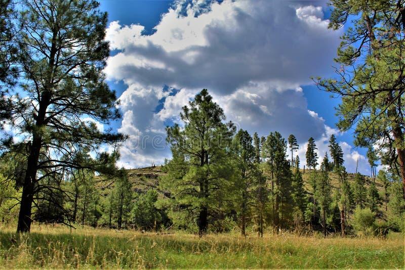 Apache-Sitgreaves nationalskog, Arizona, Förenta staterna royaltyfri bild