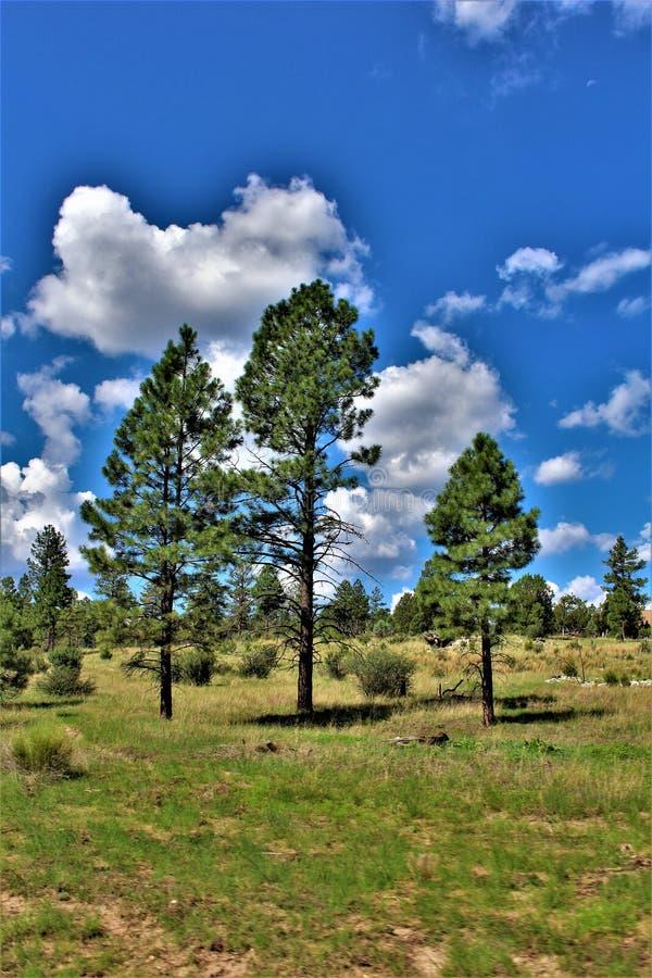 Apache Sitgreaves nationalskogar, Arizona, Förenta staterna arkivbilder