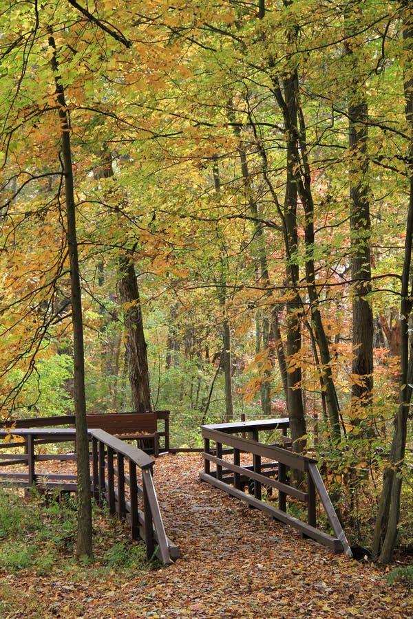 Apaisez la promenade par les bois photographie stock