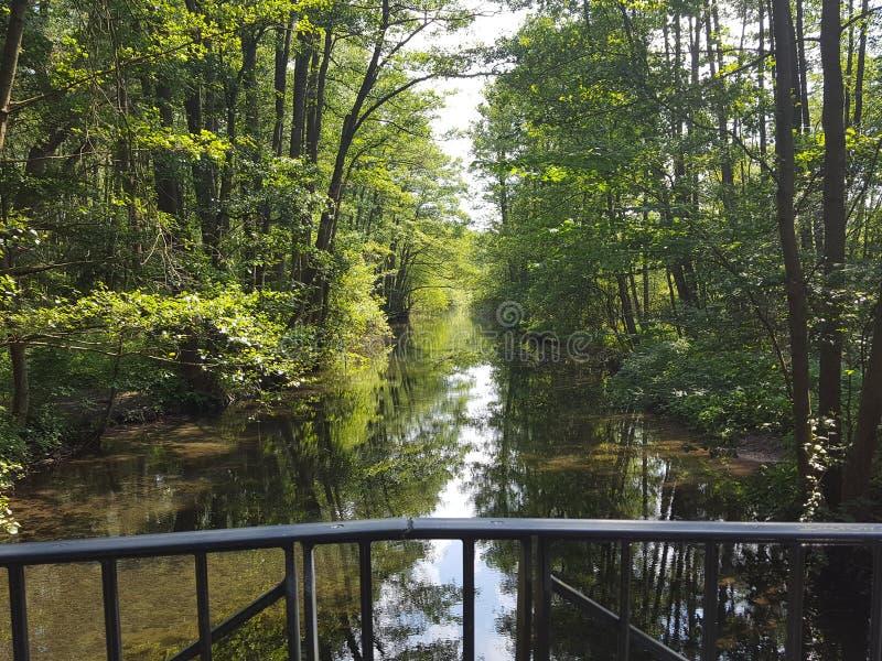 Apaisez peu de rivière au bord de la forêt photo libre de droits