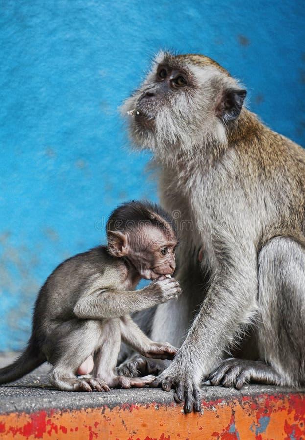 Apamoder och barn arkivfoton