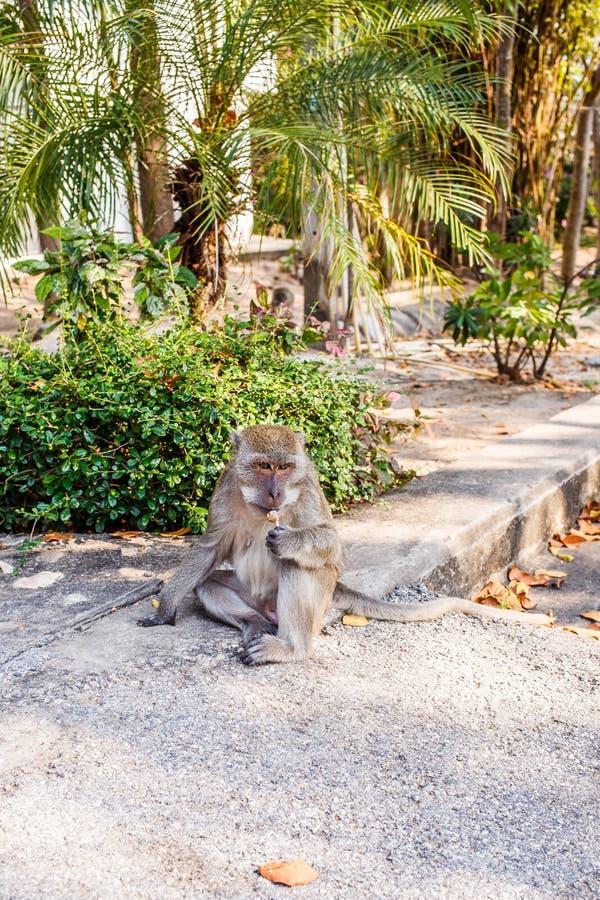 Apan sitter på jordning och äter godisen arkivfoton