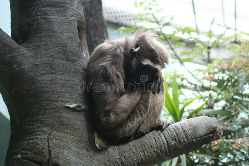 Apan sitter på trädet arkivbilder