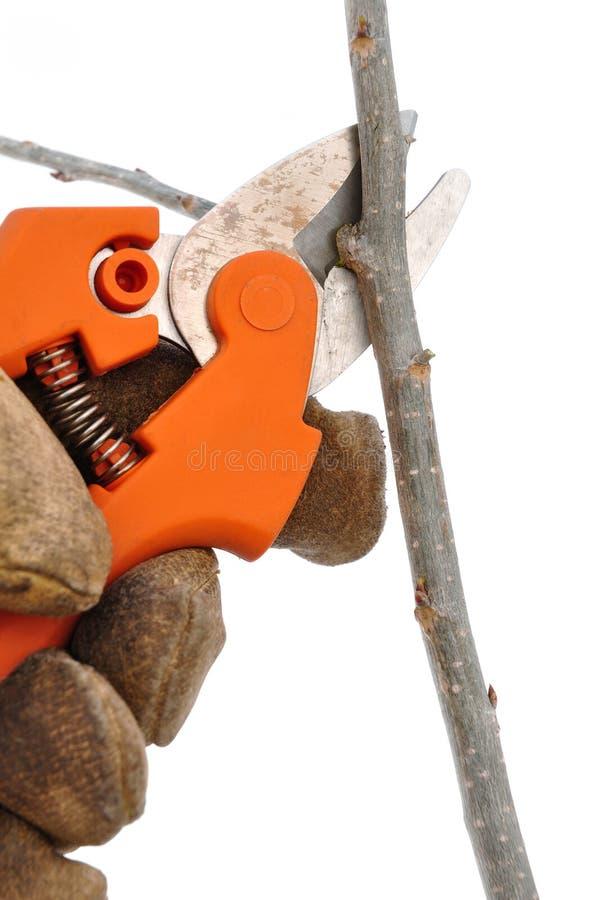 Aparando uma filial de árvore com tesouras de poda imagem de stock