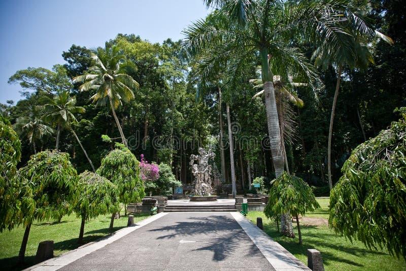 Apaskog i Bali (Sangeh) royaltyfria foton