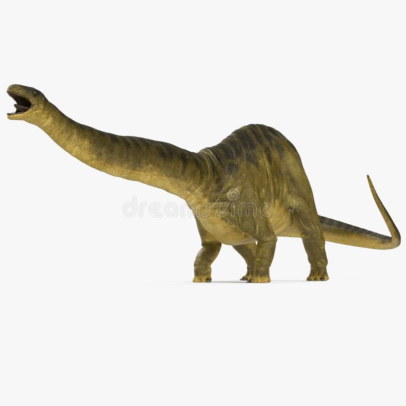 Apatosaurus Dinosaur model on white. 3D illustration. Apatosaurus Dinosaur on white background. 3D illustration stock photography