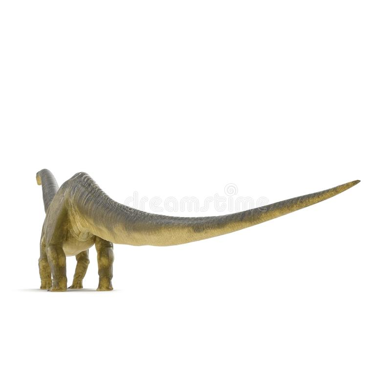 Apatosaurus Dinosaur on white. 3D illustration. Apatosaurus Dinosaur on white background. 3D illustration royalty free illustration