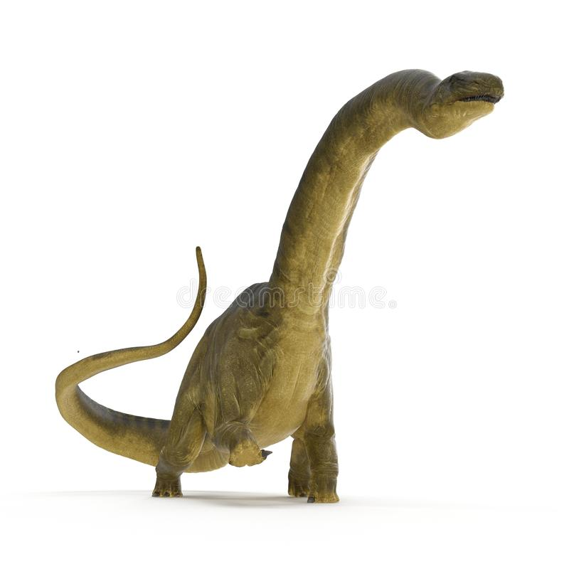 Apatosaurus Dinosaur on white. 3D illustration royalty free illustration