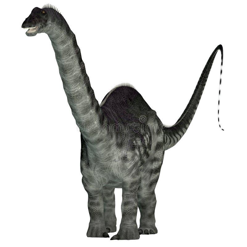 Apatosaurusdinosaurie på vit stock illustrationer