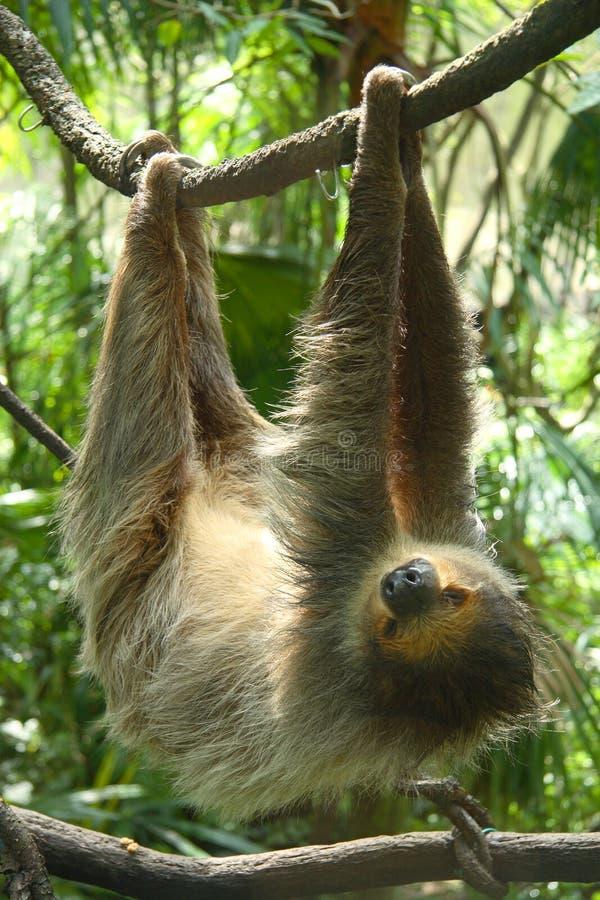 Free Ape Stock Photos - 9588023