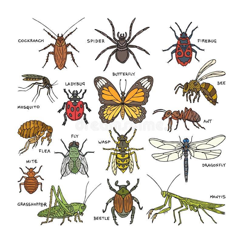 Ape dell'insetto o della formica e di volo dello scarabeo di vettore di insetto o farfalla e libellula o coccinella nell'insieme  illustrazione vettoriale
