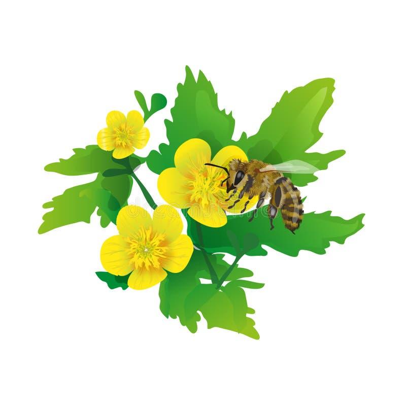 Ape su un fiore illustrazione di stock