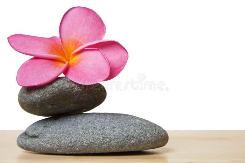Apedreje a flor da pilha e do Frangipani foto de stock royalty free