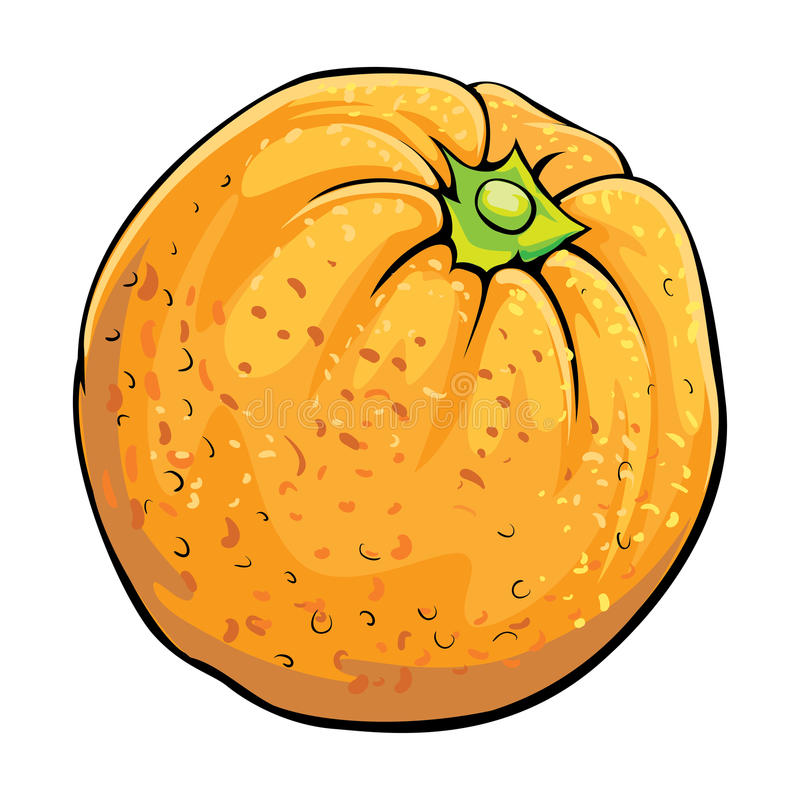 Apelsin vektor illustrationer
